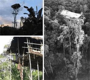 Wisata di Palu Etini Rumah Pohon
