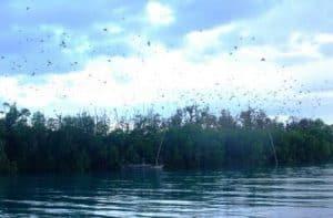 pulau-kelelawar-parigi-moutong