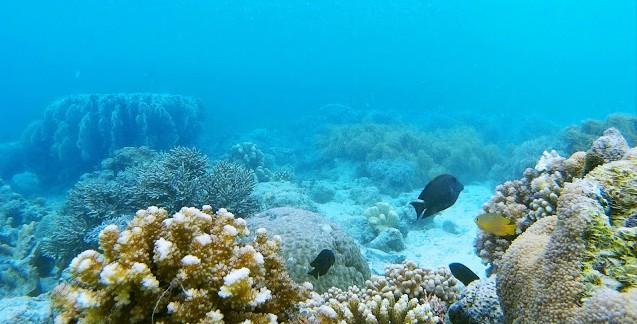 Tanjung Karang Palu Donggala Cara Menikmati Wisata Pantai
