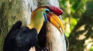 Burung Endemik Danau Tambing